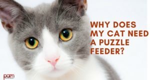 why does my cat need a puzzle feeder