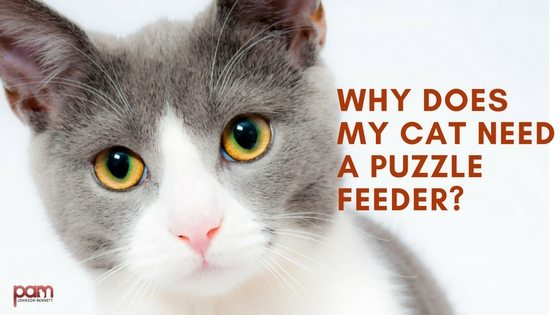 why-does-my-cat-need-a-puzzle-feeder