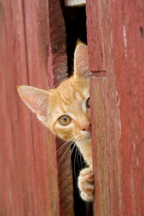 solving cat behavior problems