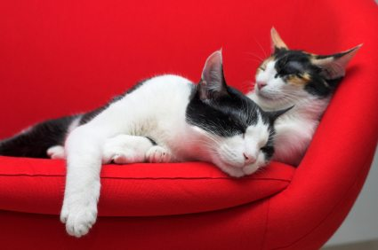Cat behavior: cats sleeping
