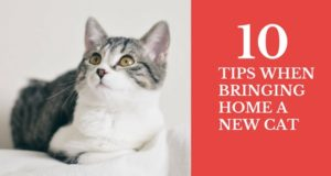ten tips when bringing home a new cat