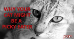 why your cat might be a picky eater