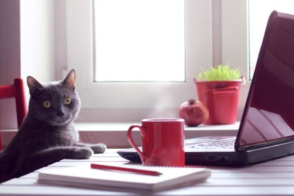 cat near laptop and coffee cup