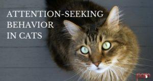 attention-seeking behavior in cats