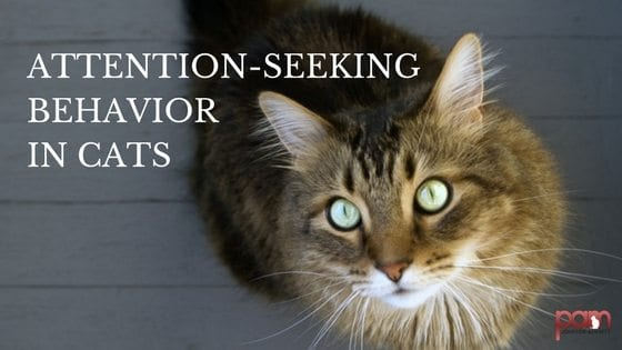 attention-seeking behavior in cats