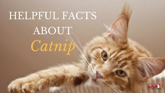 helpful facts about catnip
