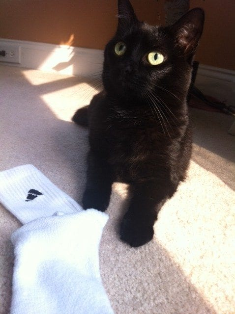 black cat with sock