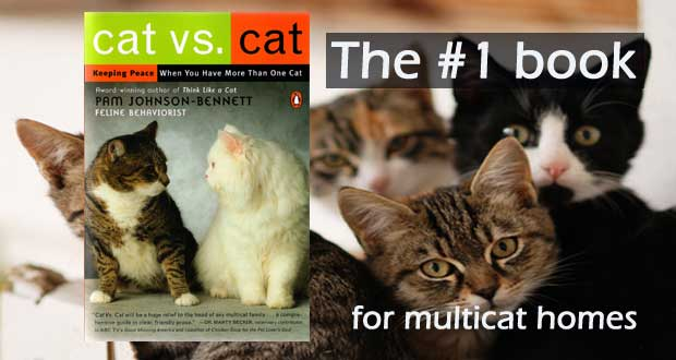 Cat vs. Cat by Pam Johnson-Bennett. The #1 book for multicat homes