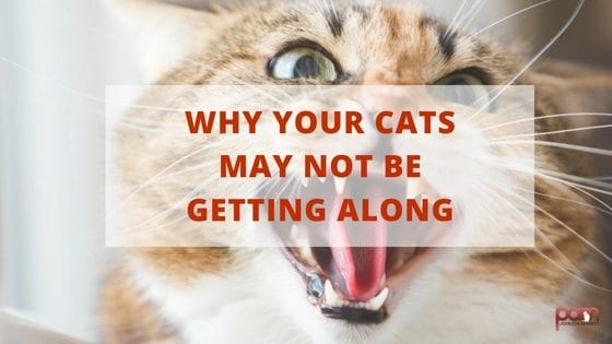 why your cats may not be getting along