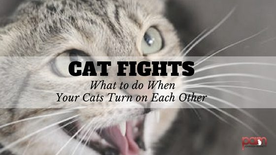cat-fights-what-to-do-when-your-cats-turn-on-each-other