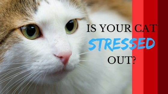 is your cat stressed out