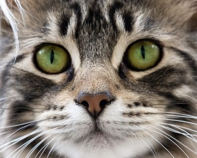 your cat's sense of smell