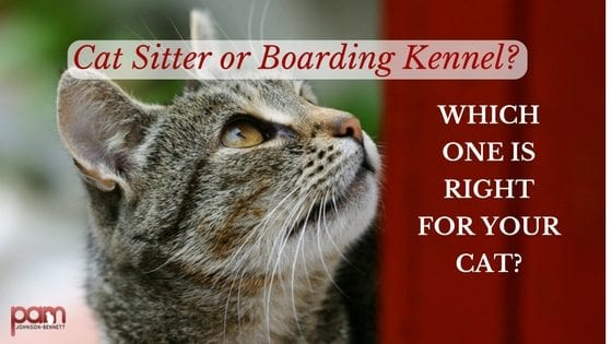 cat sitter or boarding kennel? Which one is right for your cat?