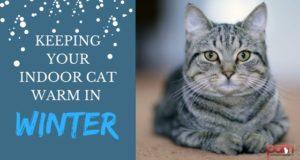 keeping your indoor cat warm in winter