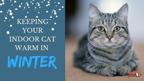 Cat Care Keeping Your Indoor Cat Warm In Winter