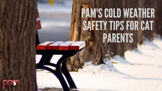 Pam's cold weather safety tips for cat parents