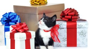 kitten surrounded by gift boxes