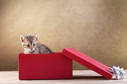 A kitten in gift box