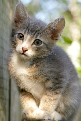 Kitten near the fence