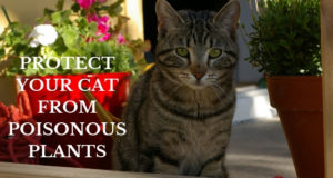 protect your cat from poisonous plants