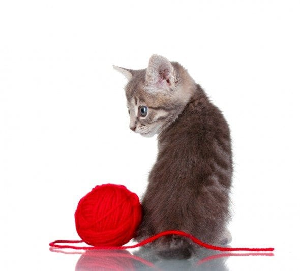A ball of yarn isn't a safe cat toy