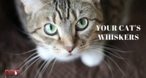 your cat's whiskers