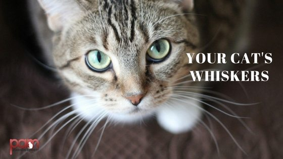 your-cats-whiskers