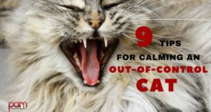 9 tips for calming an out-of-control cat