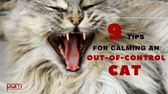 9-tips-for-calming-an-out-of-control-cat