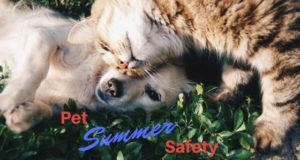 pet summer safety