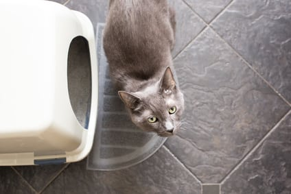 gray cat next to covered litter box