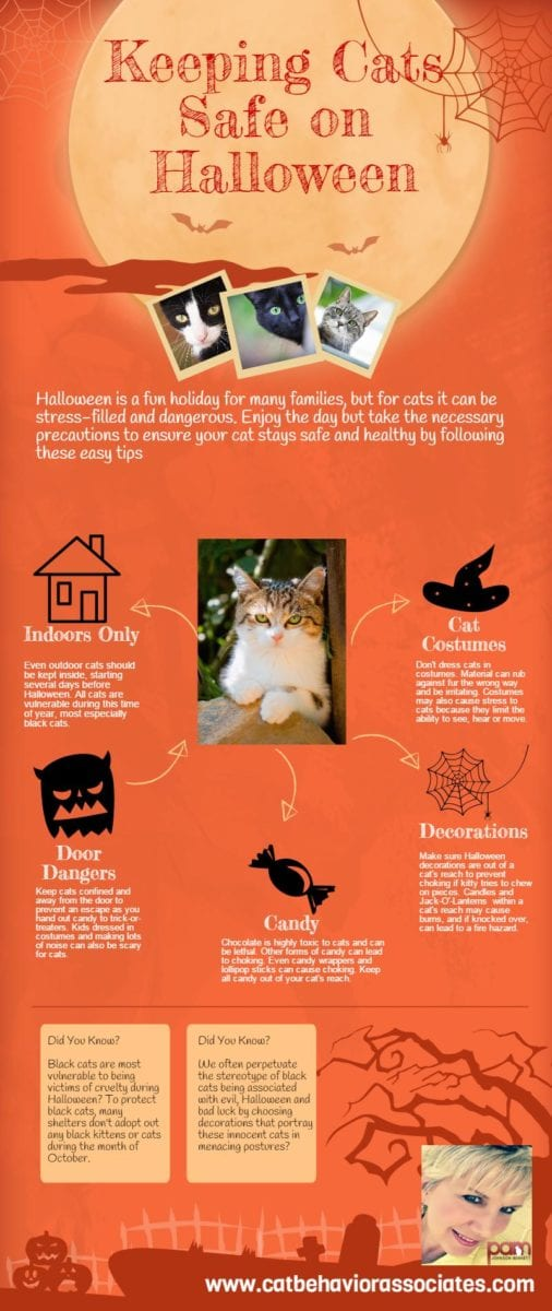 halloween cat safety infographic – answers, why, when & how of cat