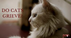 do cats grieve?