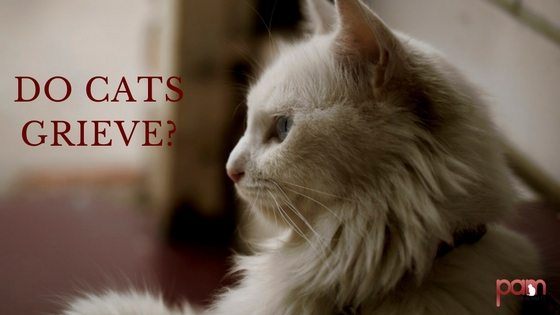do cats grieve