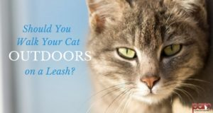 should you walk your cat outdoors on a leash?