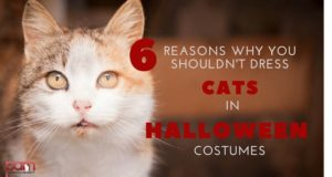 6 reasons why you shouldn't dress cats in halloween costumes