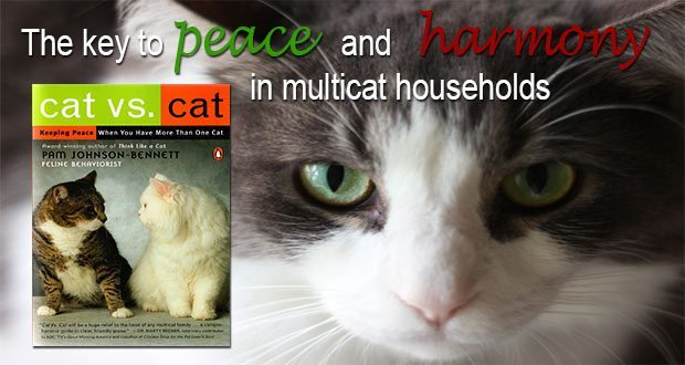 Cat vs. Cat: the key to peace and harmony in multicat households