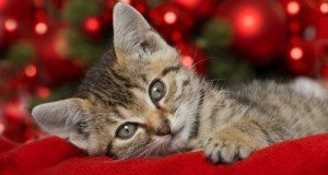 kitten sleeping on red blanket