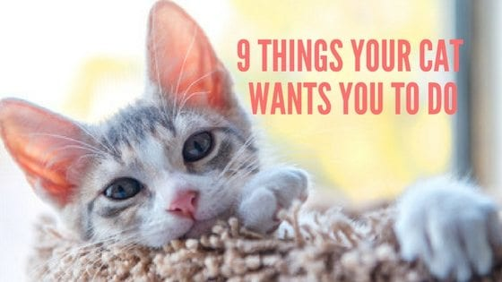 9 things your cat wants you to do
