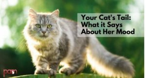 your cat's tail: what it says about her mood