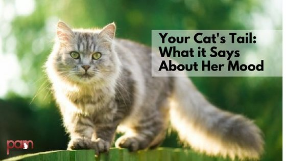 Your cat's tail
