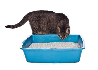 cat next to blue litterbox