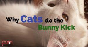 why cats do the bunny kick