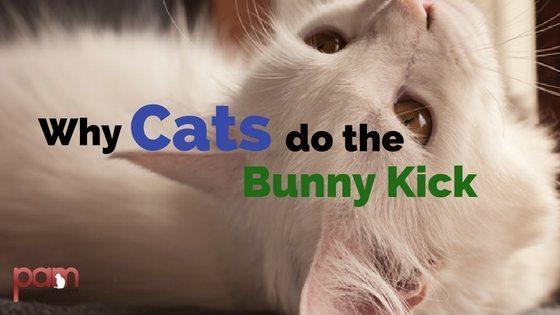 why cats do the bunny kick