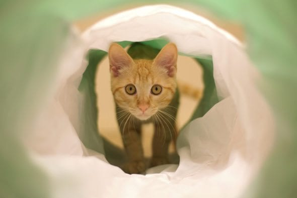 kitten in cat tunnel