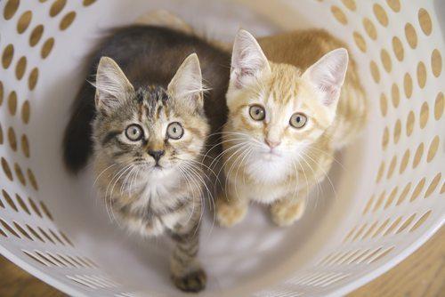 two kittens in laundry basket