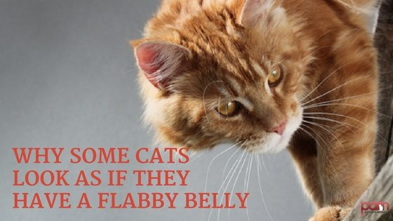 Why Some Cats Look as if They Have a Flabby Belly