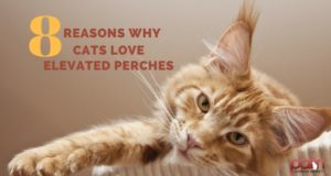 8 reasons why cats love elevated perches