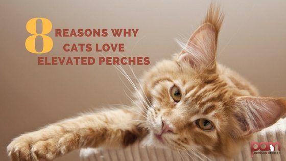 8-reasons-why-cats-love-elevated-perches