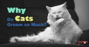 why do cats groom so much?